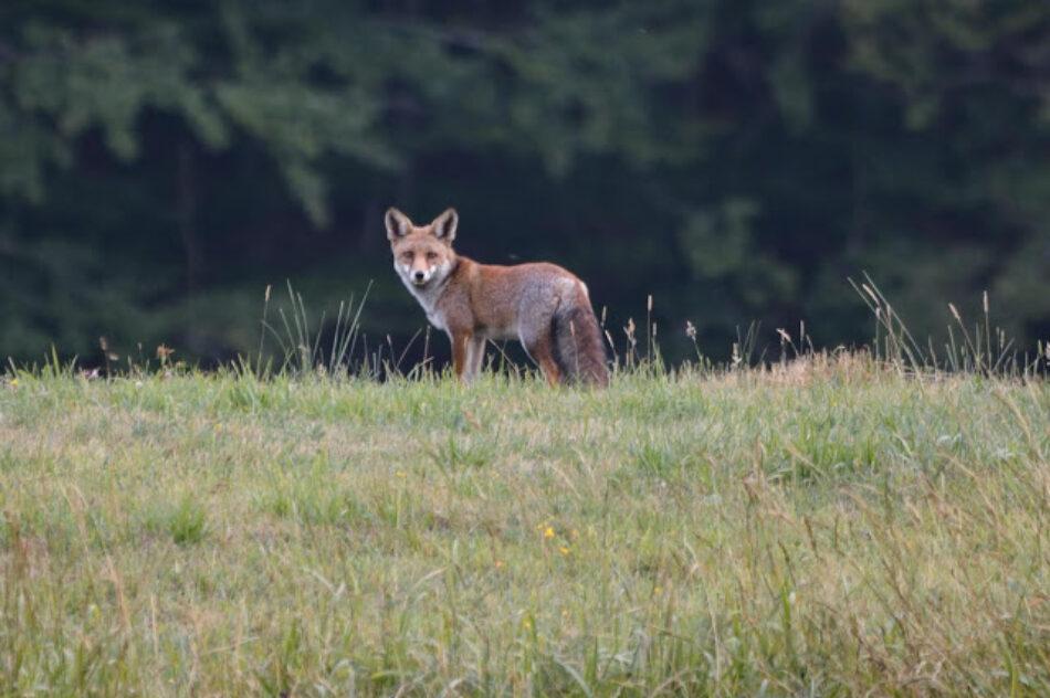 Asociaciones ambientalistas piden que la reforma del reglamento de caza ayude a solucionar los graves problemas de esta actividad