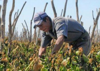 Jornaleros agrícolas, esclavos en la modernidad global
