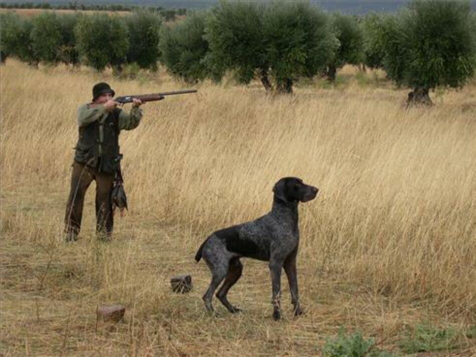 Piden que la regulación de la caza al salto tenga garantías de seguridad y sanitarias