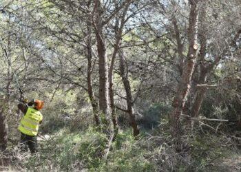 Ecologistas en Acción denuncia la «insostenibilidad de la Gestión Forestal Valenciana»
