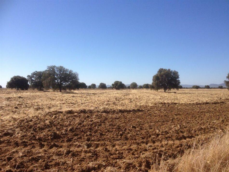El Complejo Lagunar de La Albuera en peligro: seco a pesar de las lluvias de primavera y otoño.