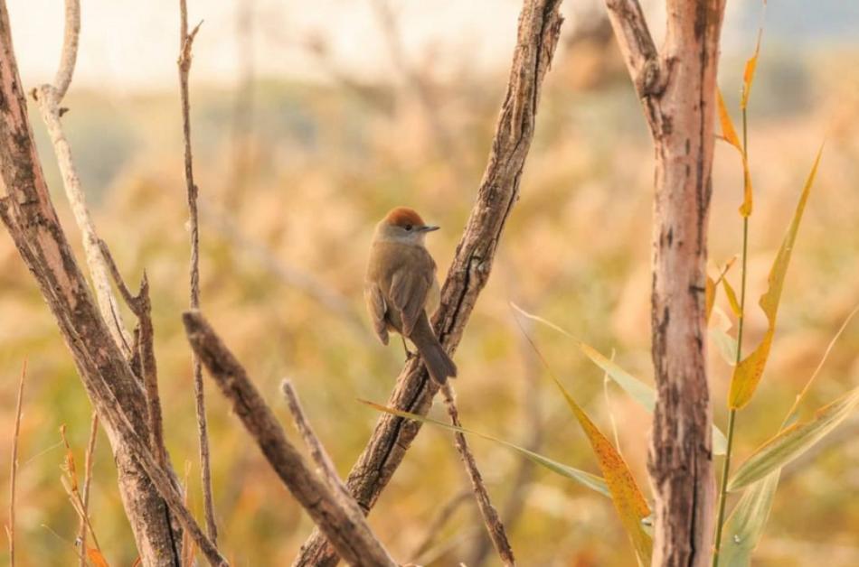 Ecologistas en Acción: «España fracasa en la meta de detener la pérdida de biodiversidad»