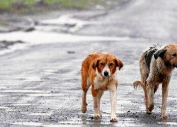 La nueva ley de protección animal prevé prohibir la venta en tiendas e implantar cursos para dueños