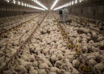 Demandan al Gobierno de España una moratoria urgente a la ganadería industrial