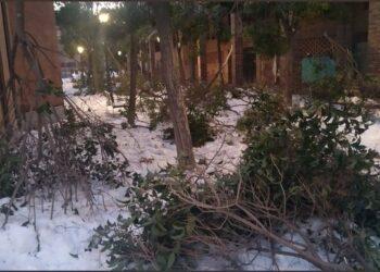 Equo Madrid exige un plan urgente para recuperar el arbolado en la región