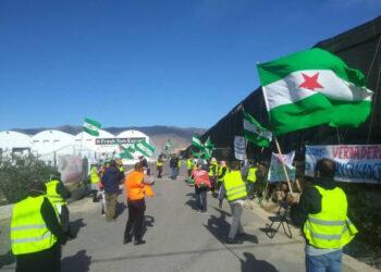 Finaliza la huelga indefinida en Fresh Tom Export tras llegar a un acuerdo la empresa con el sindicato Soc – SAT Almería
