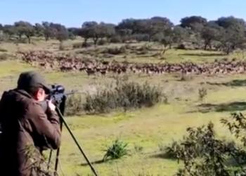 Indignación en Ecologistas Extremadura por la caza de animales de granjas cinegéticas