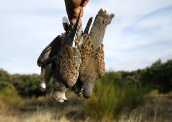 Unidas Podemos pide que se prohíba la caza de la tórtola europea y de la codorniz para frenar el declive de sus poblaciones