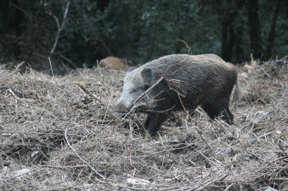Preocupación por la propuesta de caza al salto de la Consejería de Extremadura