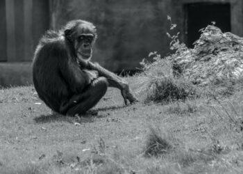 Distanciamiento social: los animales también se protegen de las enfermedades
