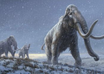 EL ADN más antiguo jamás secuenciado revela un nuevo linaje de mamuts