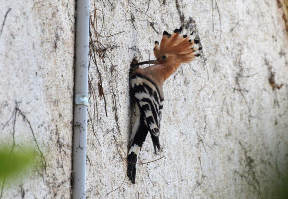 La crisis climática está reestructurando las comunidades de aves europeas y norteamericanas
