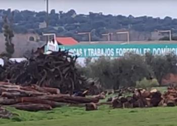 Denuncian inacción del Ayuntamiento de Villamanta contra una empresa forestal sin licencia municipal
