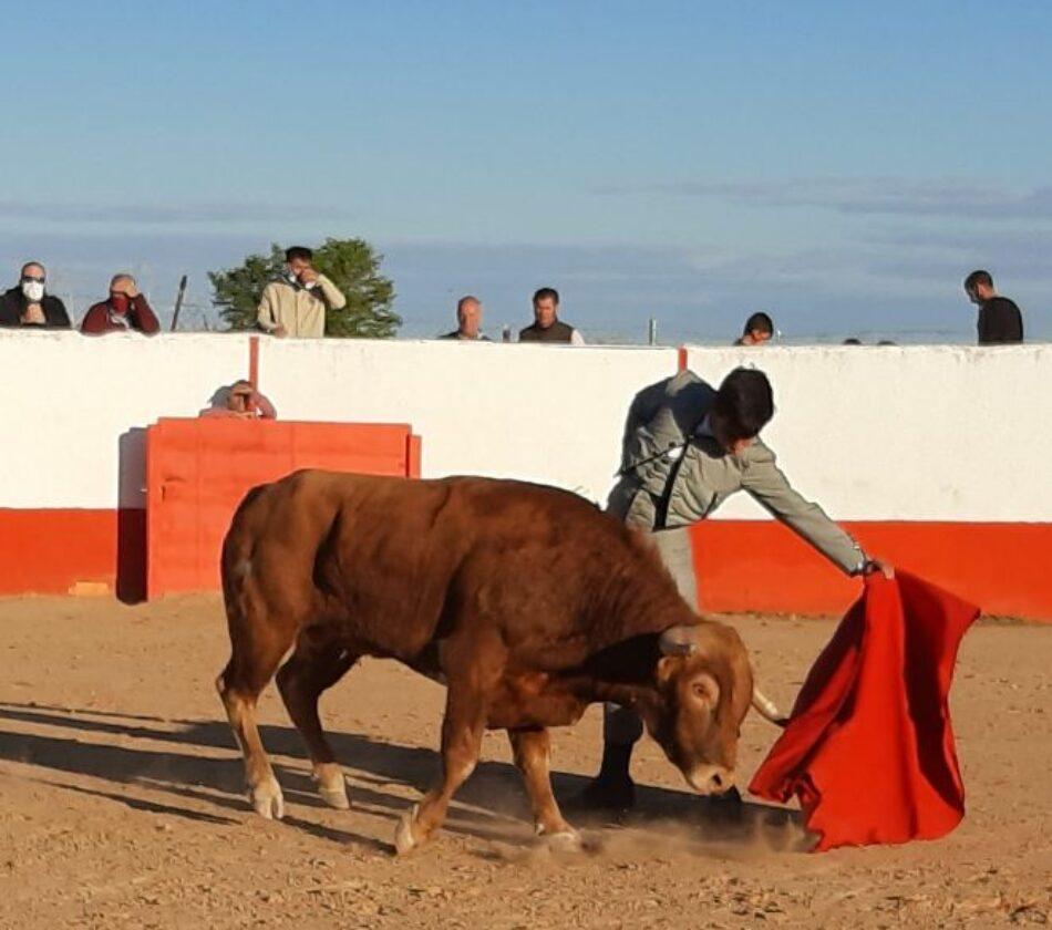 Cancelada en la finca «El Duende» en Mocejón (Toledo) una capea y lidia de becerros organizada por medio de falsificación de salvoconductos