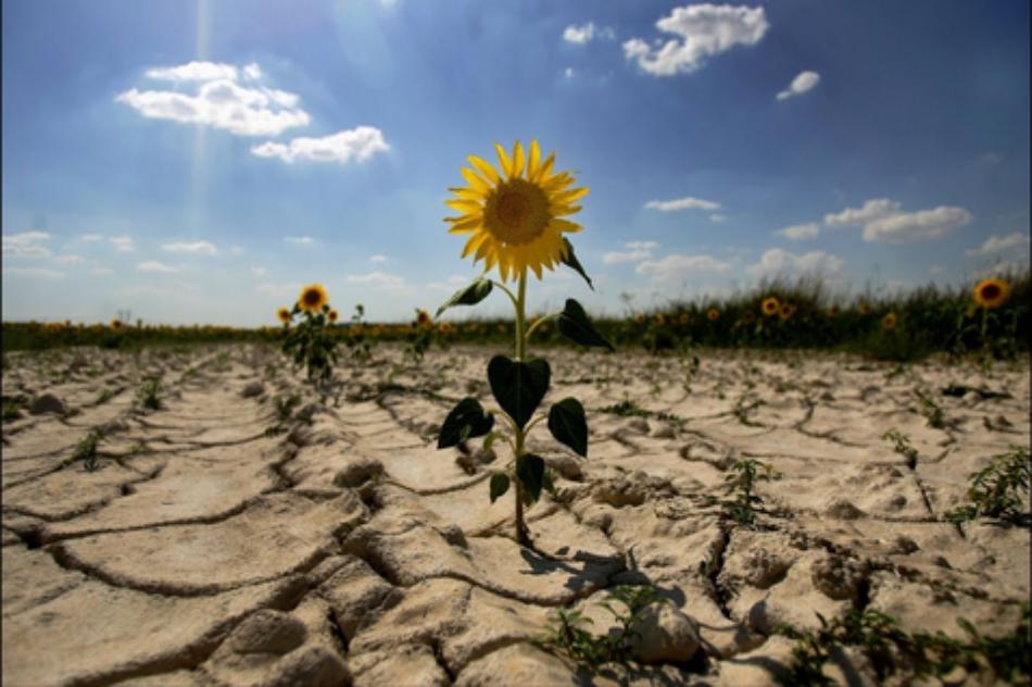 Los efectos del cambio climático pueden ser más devastadores que la pandemia