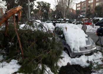 Equo y Más Madrid piden a Ayuso un plan de choque para recuperar el arbolado en la región