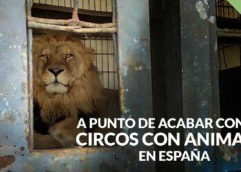 PACMA exige al Gobierno el fin definitivo de los circos con animales en España