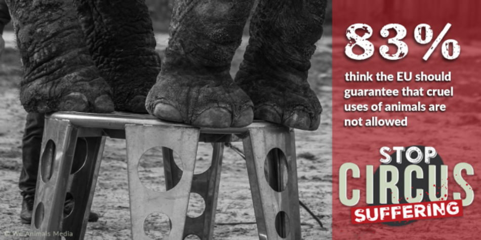 Asociación Nacional para la Defensa de los Animales (ANDA) pide a la UE la prohibición de los circos con animales salvajes