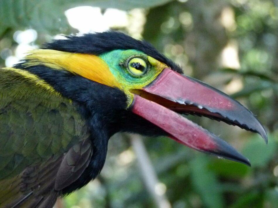 La deforestación afecta ya a casi todas las especies del paraíso de las aves