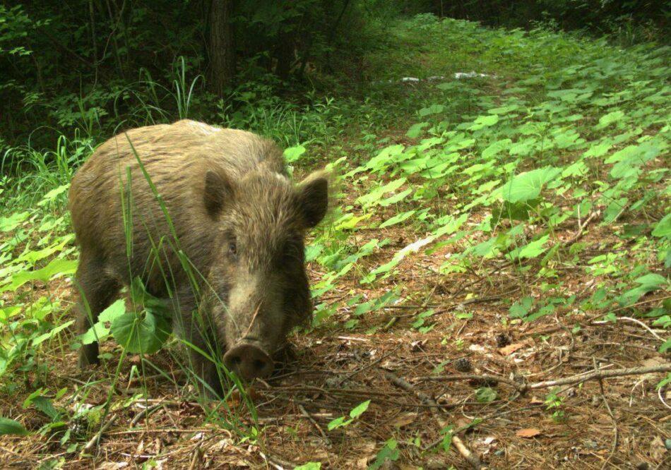 La vida animal sigue diez años después del accidente de Fukushima