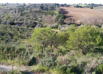 Alerta social en Méntrida: Siete proyectos fotovoltaicos a gran escala podrían afectar a 2.000 hectáreas de uno de los mejores paisajes de Castilla-La Mancha