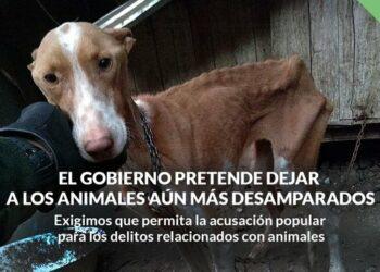 PACMA exige al Gobierno que permita la acusación popular en los delitos relacionados con animales