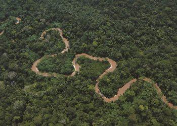 Greenpeace exige mayor protección de los ecosistemas tras el informe de la OMS que confirma el vínculo entre la pérdida de biodiversidad y las enfermedades zoonóticas