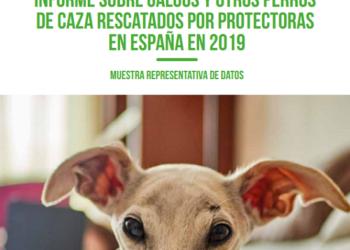 PACMA elabora un informe junto a 98 protectoras para demostrar que los cazadores abandonan a miles de perros cada año