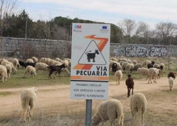 Las vías pecuarias de la Comunidad de Madrid se vuelven a convertir en mera propaganda institucional