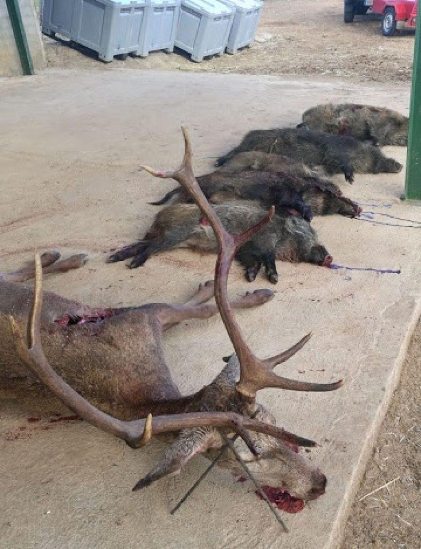 Rechazo de Ecologistas Extremadura a la declaración de las monterías y las rehalas como BIC