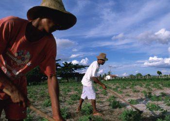 Amigos de la Tierra pide políticas para apoyar la agricultura campesina