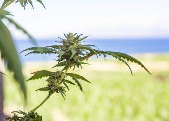 Los mejores productos de cannabis que vale la pena comprar