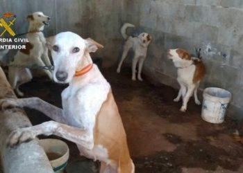 Piden un total de 25 años de prisión para varias personas imputadas en el sacrificio ilegal de 36 perros de caza.