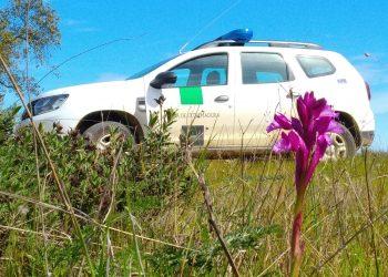 Preocupación ante la detonación de bombas caseras en vehículos oficiales de Agentes del Medio Natural en la Comarca de la Vera