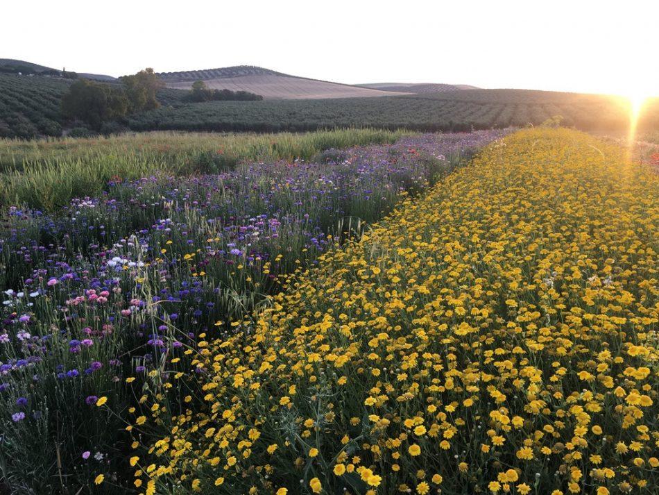 Francia, España y Portugal se unen para llenar de flores espacios degradados
