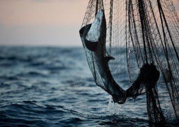 Paredes de la muerte: Greenpeace desvela los devastadores impactos de la pesca industrial en el océano Índico