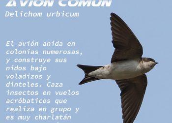 Ecologistas en Acción presenta la campaña 'Las tres mosquiteras'