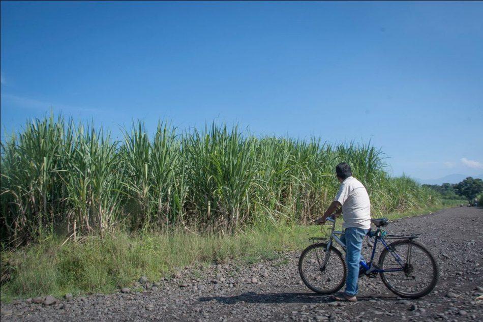 Alianza por la Solidaridad denuncia el impacto ambiental y social del cultivo de Caña de Azúcar