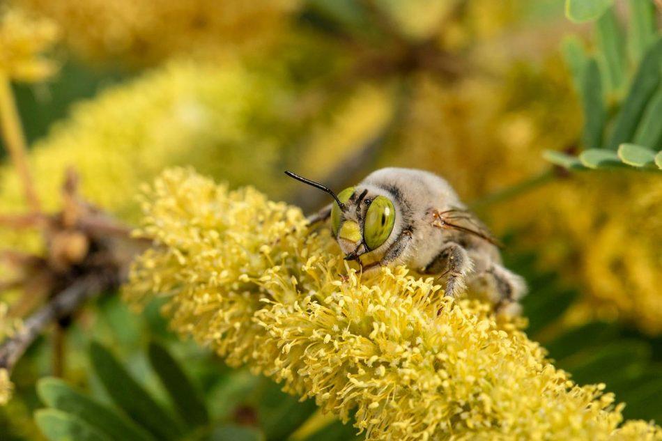 Identifican más de 470 especies de abejas en una zona desértica entre EE UU y México
