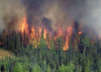 Incendios 'zombis' despiertan en los bosques boreales