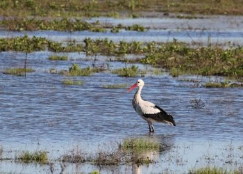 Un informe de la Abogacía del Estado confirma que la Laguna de la Janda es pública y está usurpada