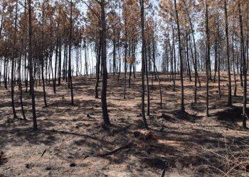 Verdes Equo exige a la Junta de Andalucía que no deje sin asignar el 99,2% de los fondos anti-incendios