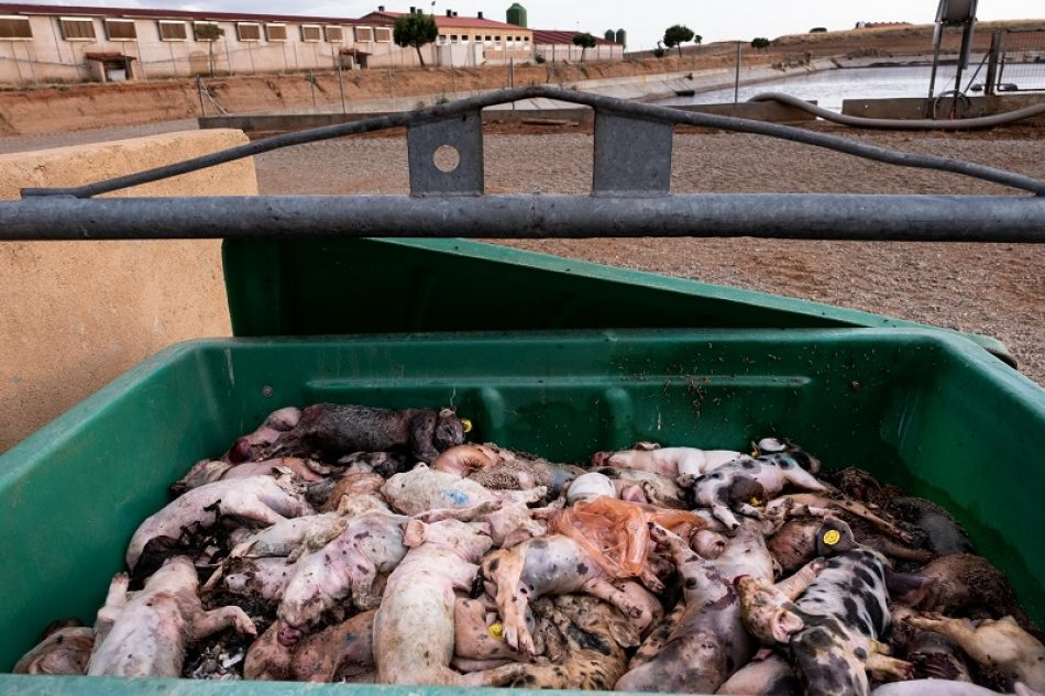 Más del 35% de las aguas analizadas por la Red Ciudadana de Vigilancia están contaminadas por nitratos