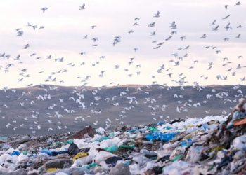 «Un 11 % del peso de la compra estándar va directamente a la basura»