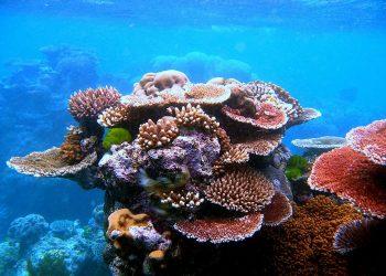 Unidas Podemos exige explicaciones al Gobierno sobre el voto desfavorable del Ministerio de Asuntos Exteriores a declarar la Gran Barrera de Coral Patrimonio Mundial en peligro