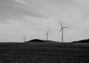 Verdes EQUO: «La transición energética debe ser compatible con la protección de la biodiversidad y del territorio»