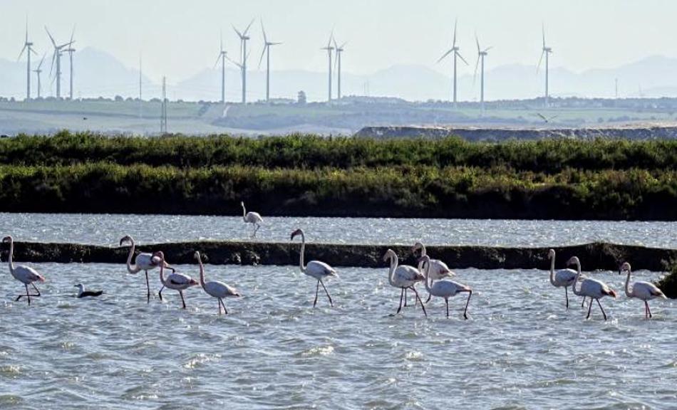 Alianza Energía y Territorio (ALIENTE) pide una moratoria temporal en la autorización de renovables a gran escala en Andalucía