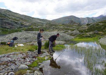 Red Cambera finaliza la búsqueda del hongo causante de la muerte masiva de anfibios en la Cordillera Cantábrica