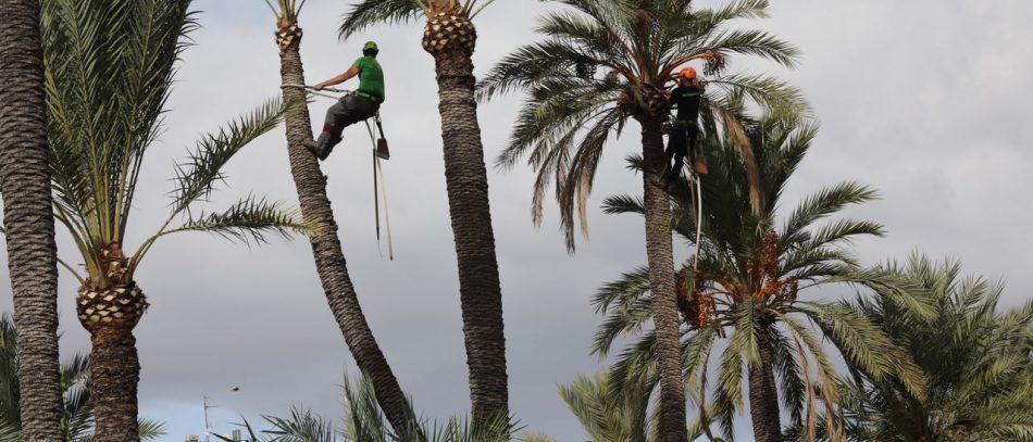 CGT denuncia que el personal público del Ayuntamiento de Elx realiza el trabajo de empresas privadas