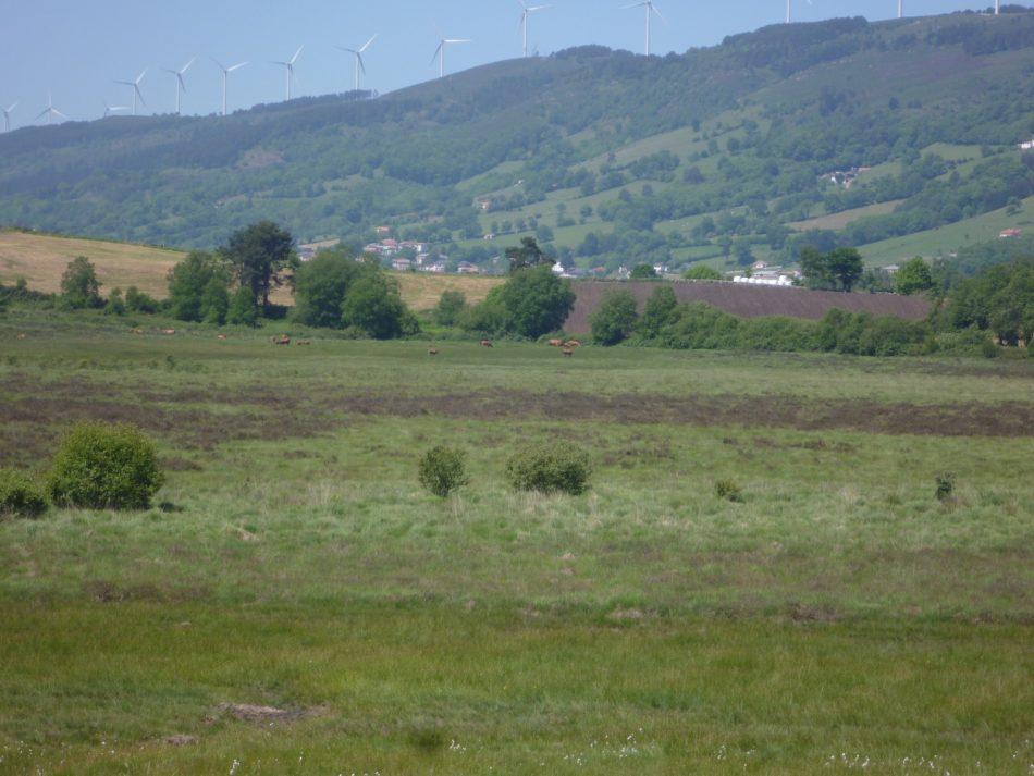 Coordinadora Ecoloxista d'Asturies: «Hay que proteger la turbera de la Molina»